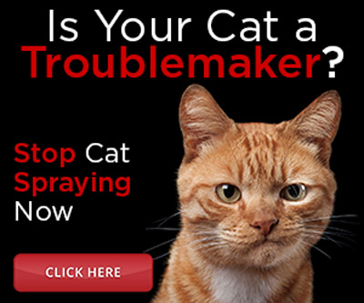 stop cat spraying ad