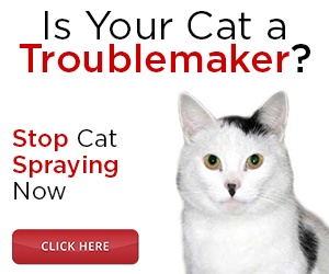 popular cat names 2015